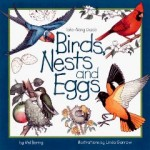 birds nests and eggs