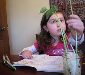 Backyard Science Activities, Crafts, and Books