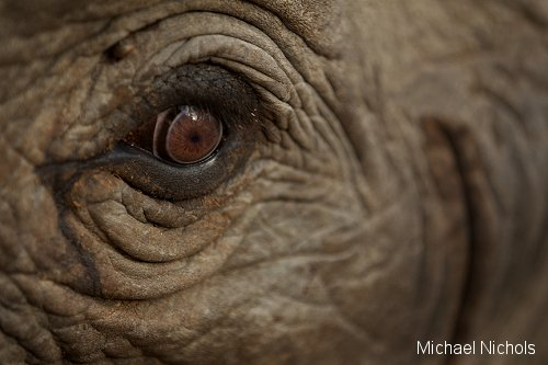 Elephants Eye
