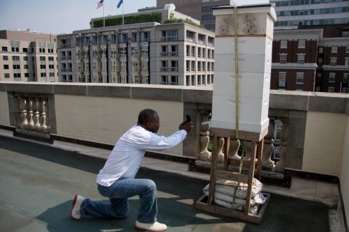 LeVar Burton Photographing Bees